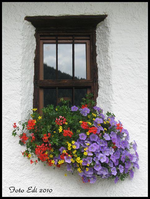 flower box4